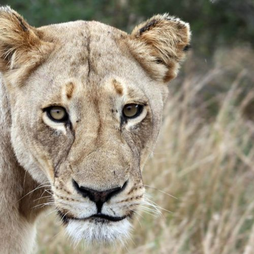 2017 - The Year Of Travel For South Africa
