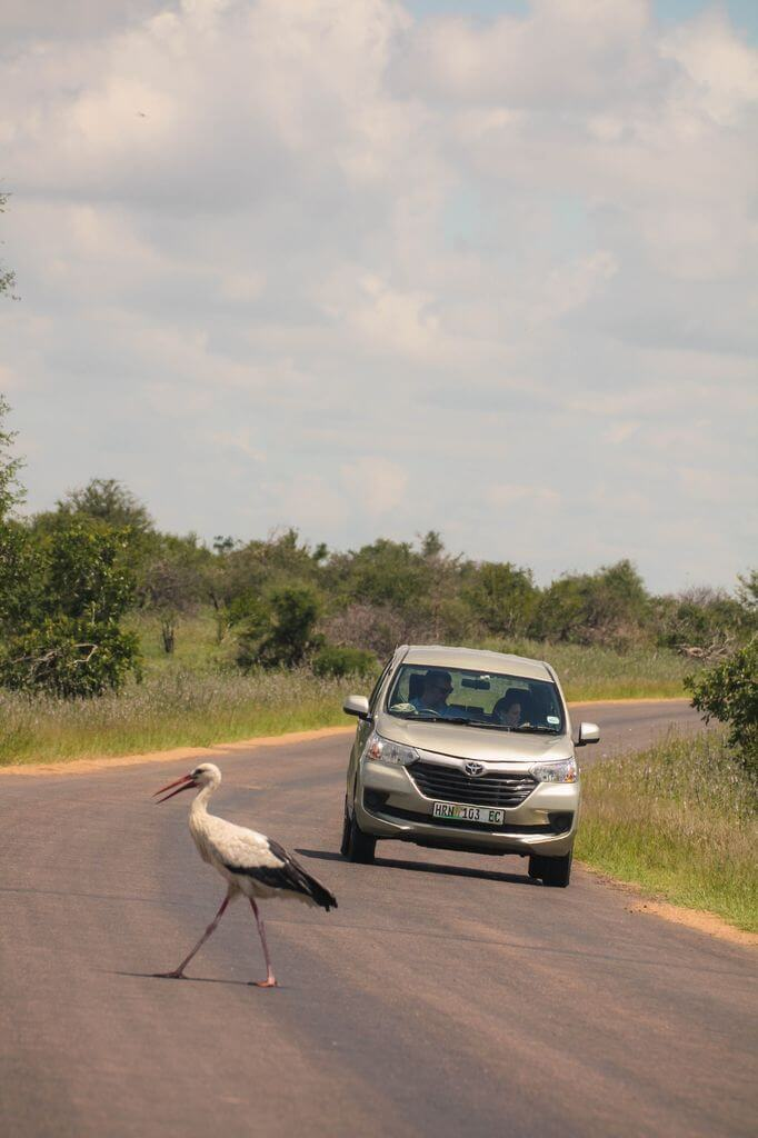 Bird - Kruger Park