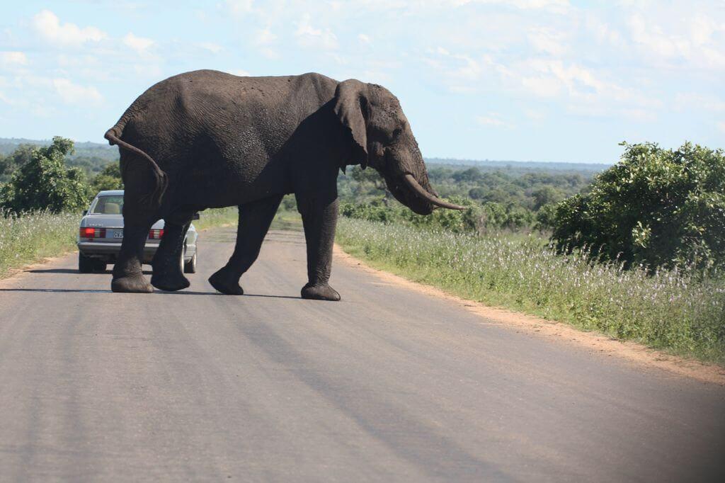 Breakdown - Kruger Park
