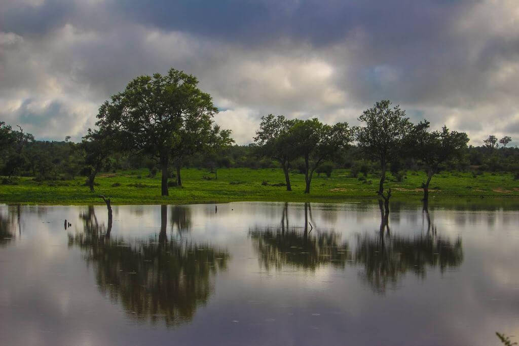 Green Kruger National Game Reserve