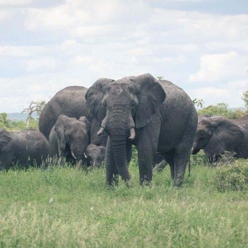 Satara Kruger National Game Reserve