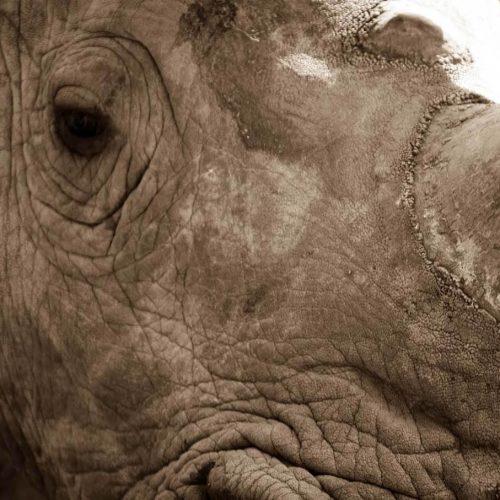 Braai Brothers Rhino