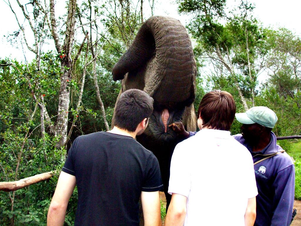 Exploring Knysna Elephant Park