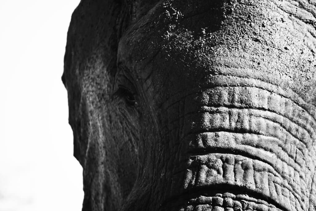 Elephant Chase - Kruger Park