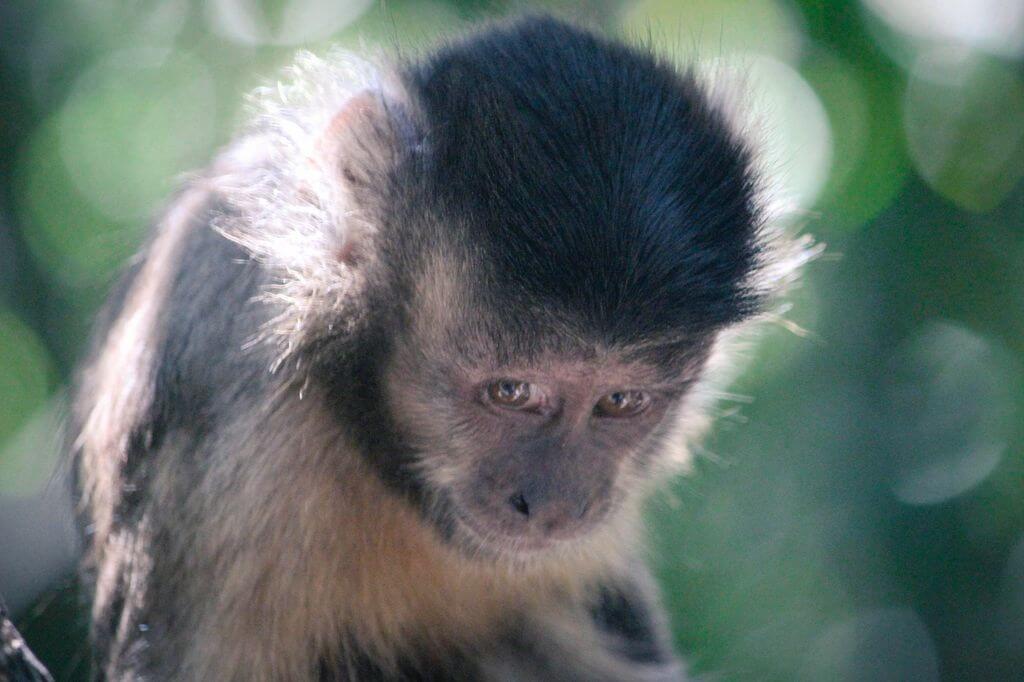 Monkeys, The Crags, Plettenberg Bay