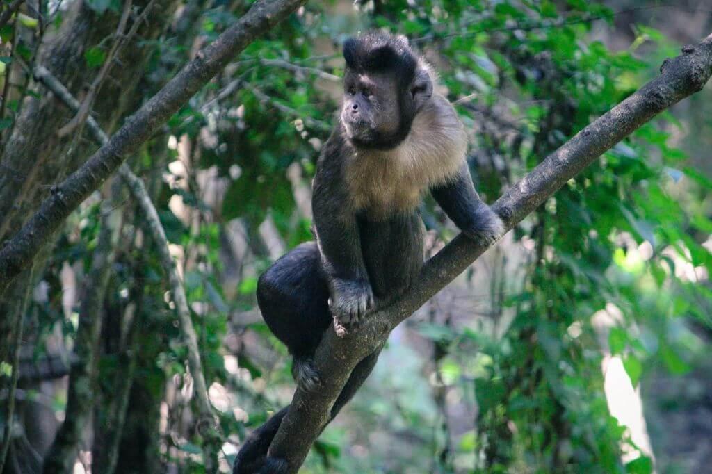 Primates, The Crags, Plettenberg Bay