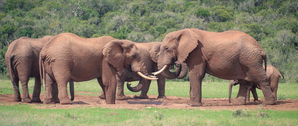 Addo National Elephant Park
